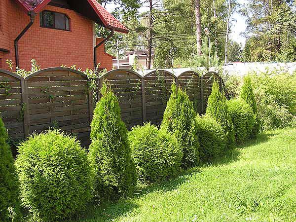 Дренаж для живой изгороди