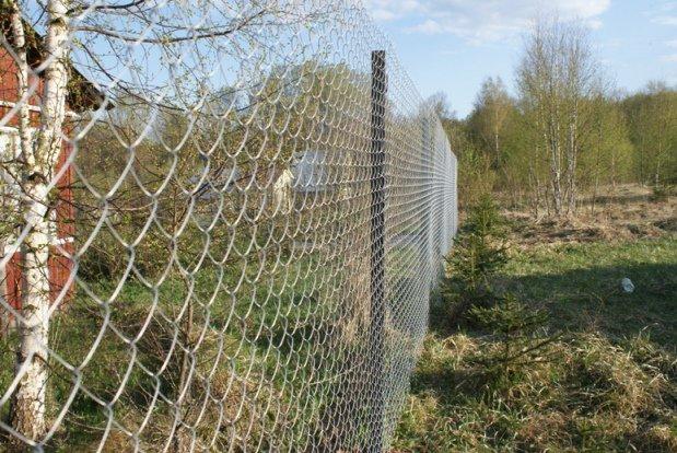 Забор из сетки рабицы на приусадебном участке