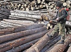 Мероприятия по защите древесины