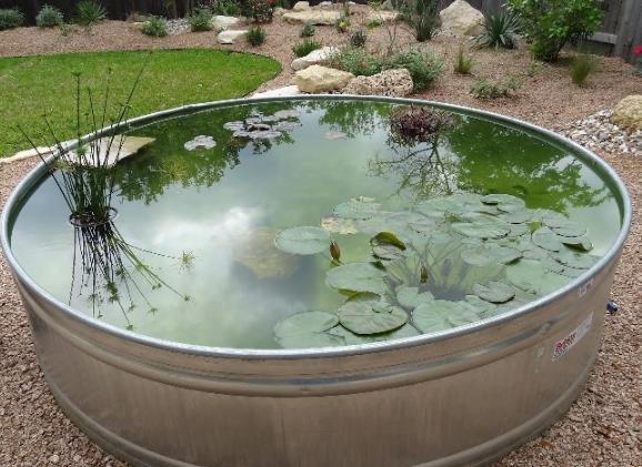 Советы по уходу за садовым водоемом
