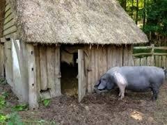 Строим сарай для свиней