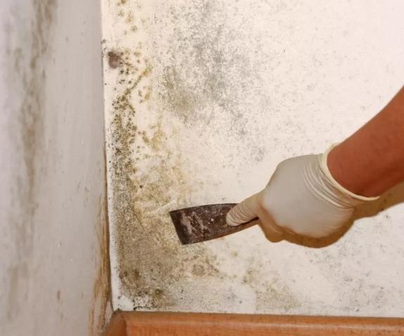 Как избавиться от плесени в помещении